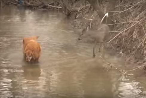 Un perro y su amigo inesperado se vuelven virales al conocerse en un río