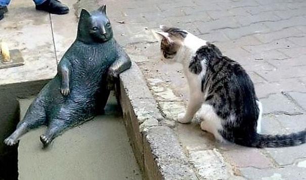 El gato más famoso de Estambul se convirtió en una leyenda. ¡Y ahora ha conseguido su propia estatua!