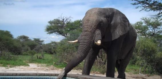 Un hombre se viraliza con la grabación de un vídeo mientras estaba relajado en la piscina