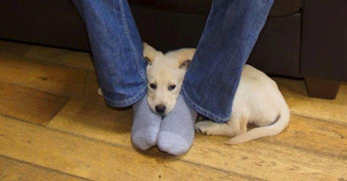 esta es la razon por la que los perros adoran nuestros pies banner