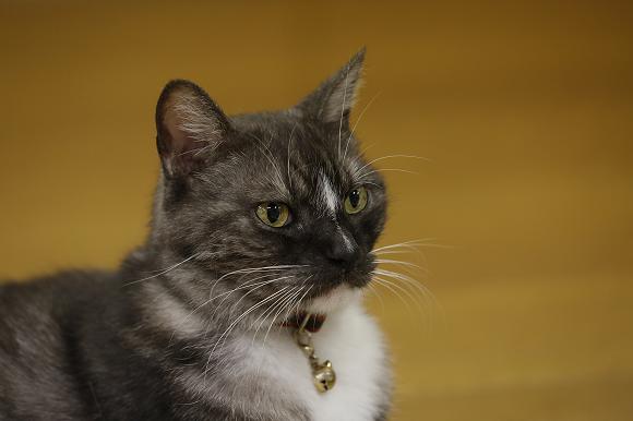Los gatos que viven en las instalaciones de entrenamiento de sumo de Tokio son los más tiernos que has visto nunca