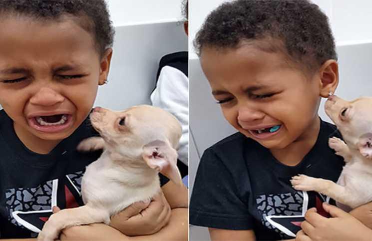 Te enternecerás al ver la emotiva reacción de este niño al conocer por primera vez a su nuevo amigo