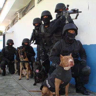 Los policías necesitaban nuevos perros adiestrados y decidieron entrenar a estos Pit Bulls