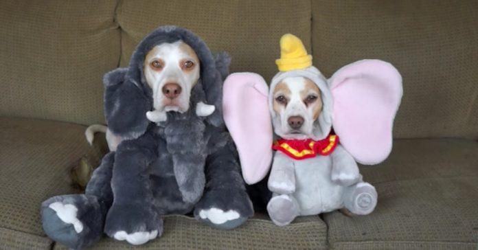 maymo costumes a