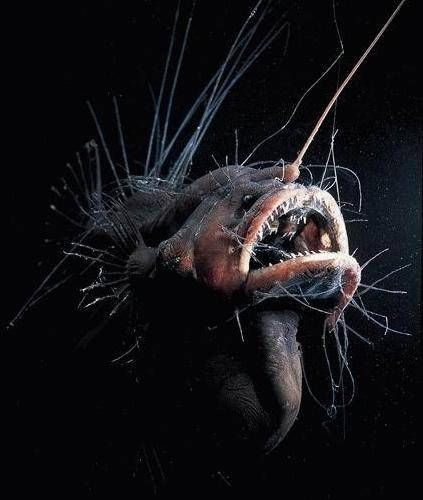 10 criaturas marinas que parecen sacadas de otro planeta
