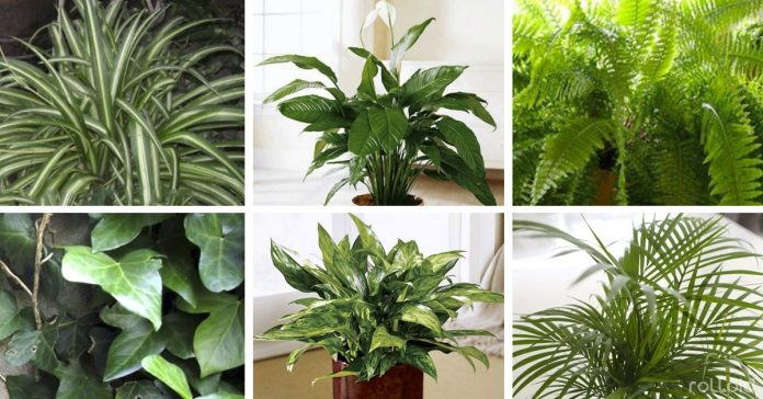 10 plantas nasa purificar hogar