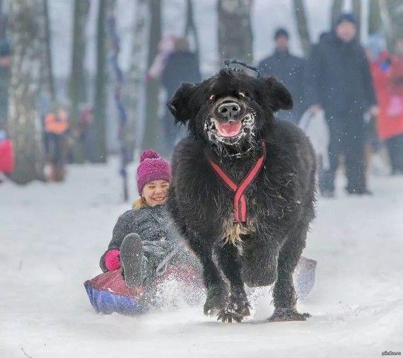 14 Adorables situaciones entre niños y sus perros que te alegrarán el día