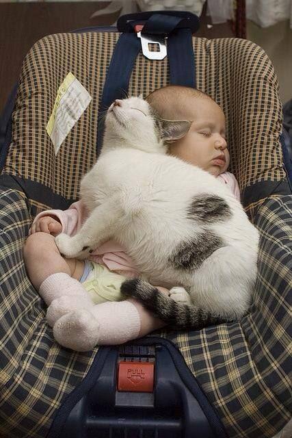15 Gatos que estaban demasiado cansados para llegar a la cama...