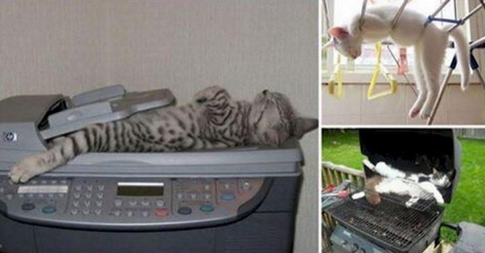 15 gatos que estaban demasiado cansados para llegar a la cama banner 1