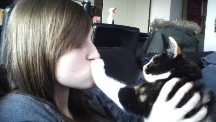 16 Imágenes que tratan de recordar por que suelen gustar los gatos