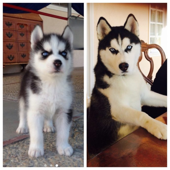 33 adorables fotos de cachorros que crecieron demasiado rápido