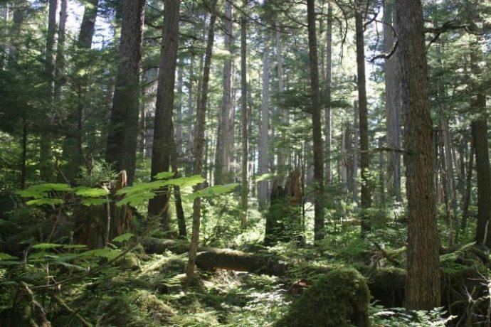 8 de los bosques más antiguos del mundo