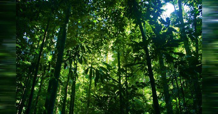 8 de los bosques mas antiguos del mundo banner