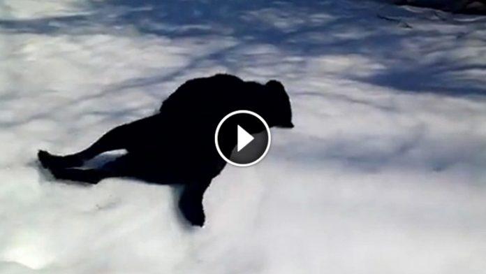 black lab body slide