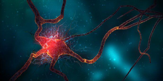 Científicos consiguen rejuvenecer ratones adultos utilizando sangre humana de adolescentes