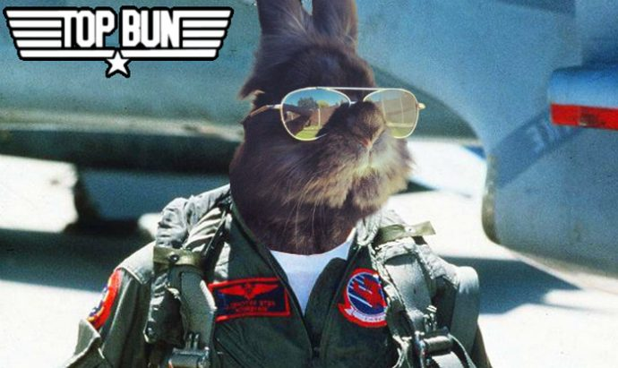 Desde que pusieron unas gafas de sol a este conejo se ha vuelto famoso y ahora ha iniciado una batalla en Internet