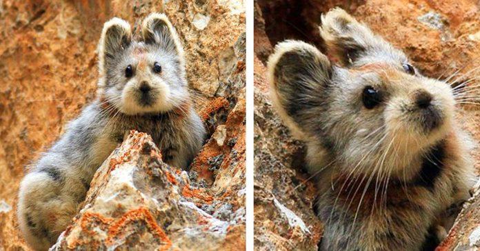 despues de 20 anos este misterioso animal vuelve a aparecer en china banner