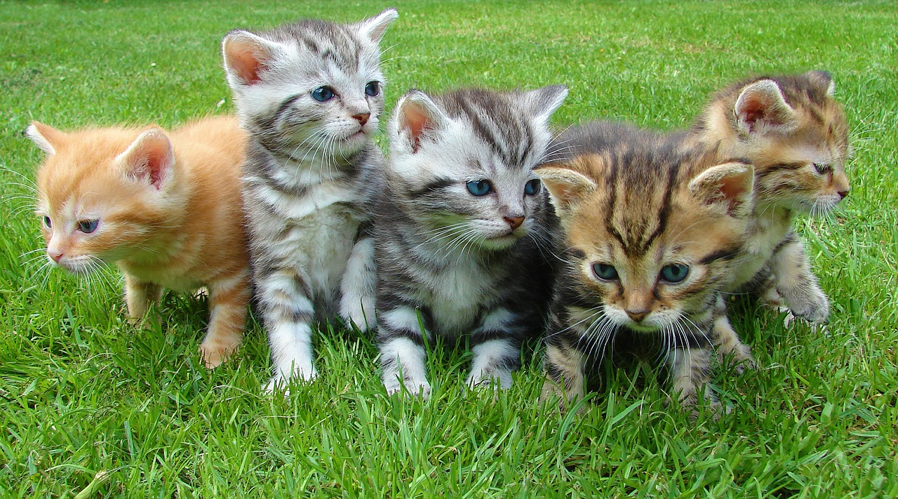 puppy kittens photo