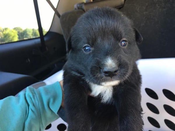 Esta mujer encontró 9 cachorros abandonados en una nevera y salvó sus vidas