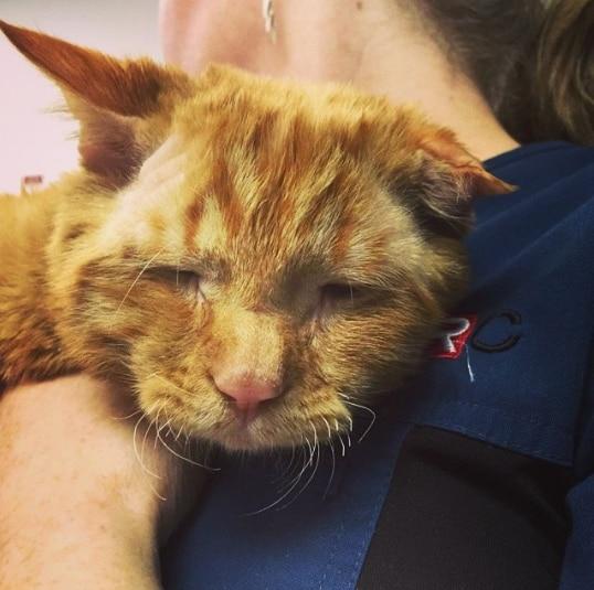 El gato BenBen más triste del mundo se viraliza después de ser rescatado