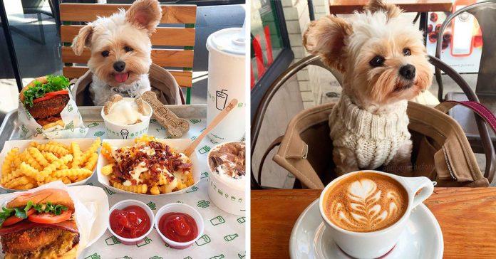 este cachorro hambriento y sin hogar fue rescatado banner