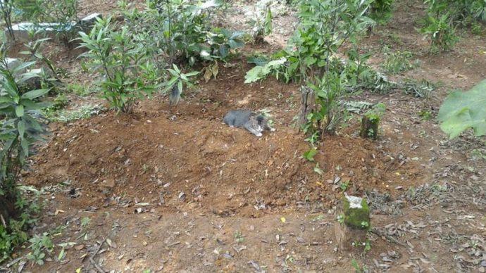 Este gato se negó a abandonar la tumba de su dueño durante un año completo