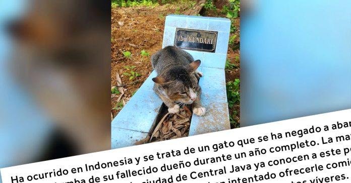 este gato se nego a abandonar la tumba de su dueno durante un ano completo banner