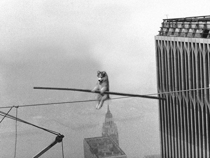 Este Husky se quedó atrapado en un gigantesco cocotero... Y todo internet decidió actuar