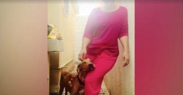 Este perro abandonado estaba cubierto de bultos... No lo reconocerás después de la milagrosa recuperación