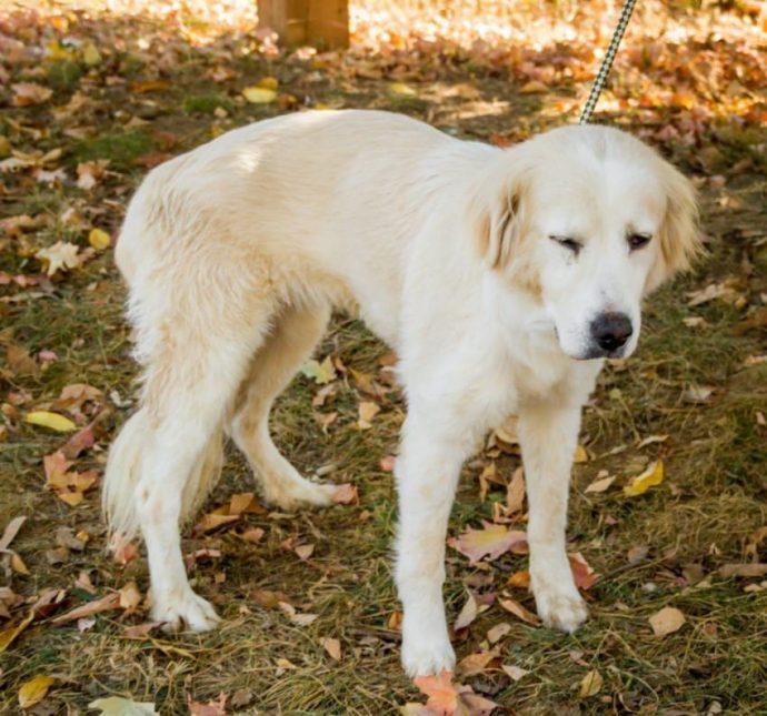 Este perro actuó de forma extraña durante meses por una enorme piedra que tenía en el riñón