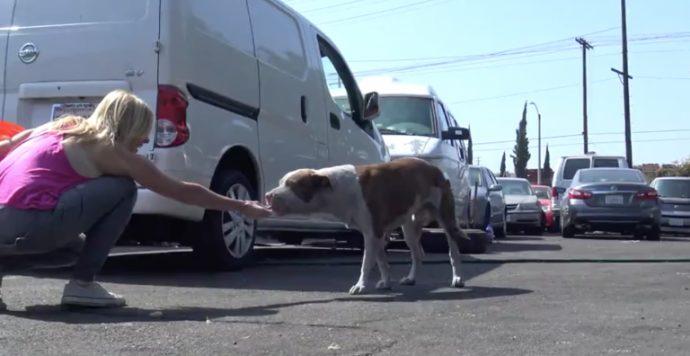 Este perro llevaba días deambulando en la calle hasta que saltó al interior del coche de unos extraños