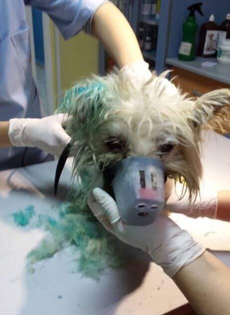 Este perro multicolor iba a ser sacrificado, pero ocurrió lo impensable.