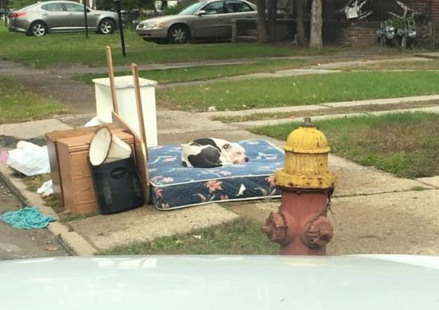 Este perro pasó un mes durmiendo frente a su casa esperando que sus dueños volvieran a buscarle