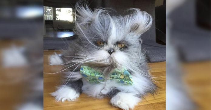 gato perro banner