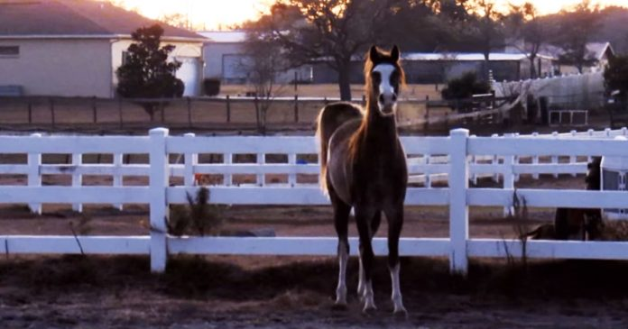 horse looks like graceful dancer when she trots featured