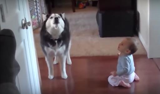 15 Cosas que ocurren al juntar bebés y perros por primera vez