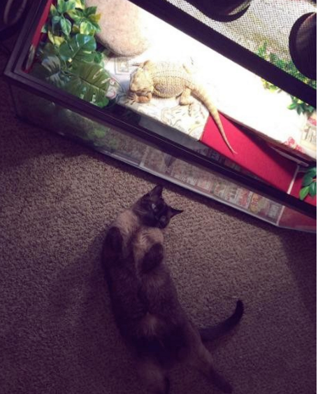 Este lagarto y un gato odiaban a todo el mundo... hasta que se encontraron el uno al otro