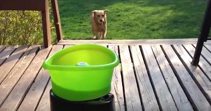 Este perro se lo pasa en grande jugando con un lanzapelotas