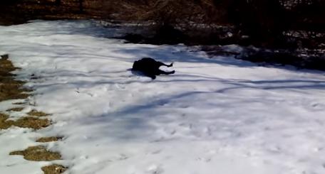 Quería grabar a su perro jugando en la nieve, pero lo que capturó fue demasiado gracioso para describirlo