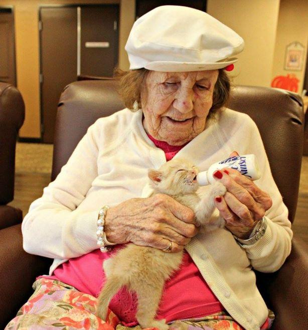 Llevaron gatitos abandonados a una residencia de ancianos para llevar a cabo este gran proyecto
