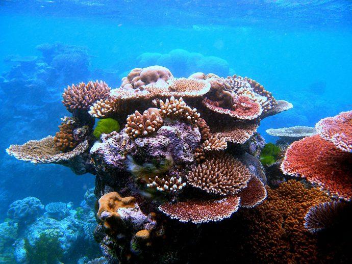 La Gran Barrera de Coral ha sido destruida después de 25 millones de años