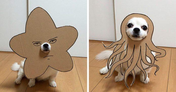 las imagenes de este perro y sus divertidas mascaras de carton banner