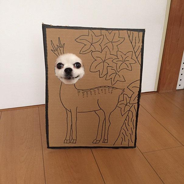 Las imágenes de este perro y sus divertidas máscaras de cartón se han vuelto virales