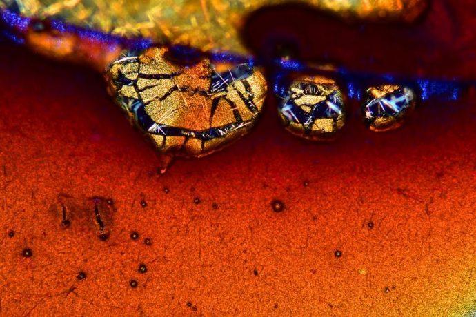 20 Ganadores de la competición de macrofotografía muestran el mundo como nunca lo habías visto