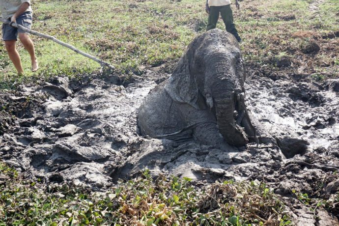 Tienes que ver cómo consiguieron rescatar a esta cría de elefante de una muerte segura