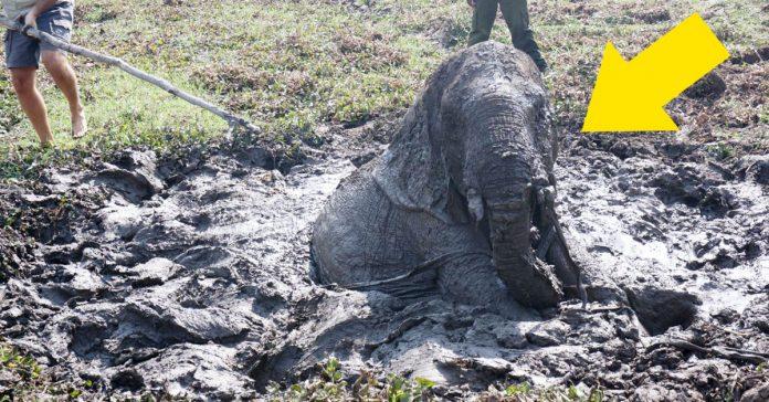 mira como este bebe elefante es rescatado de una muerte segura bajo el sol banner