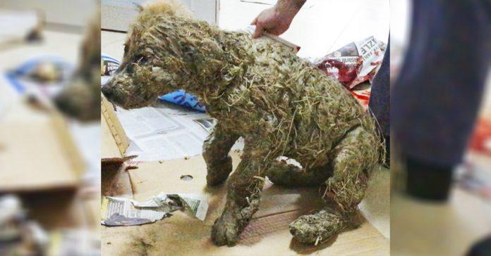no podras creer todo lo que ha sufrido este cachorro hasta que lo veas banner 1