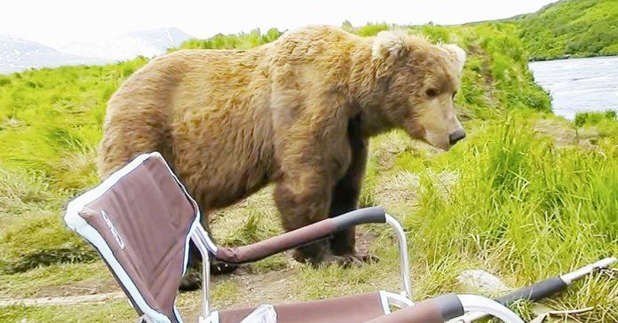 oso campista