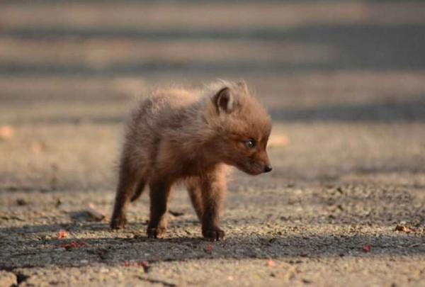 Padre e Hija encontraron unas crías de zorro en su jardín y buscaron inmediatamente su cámara