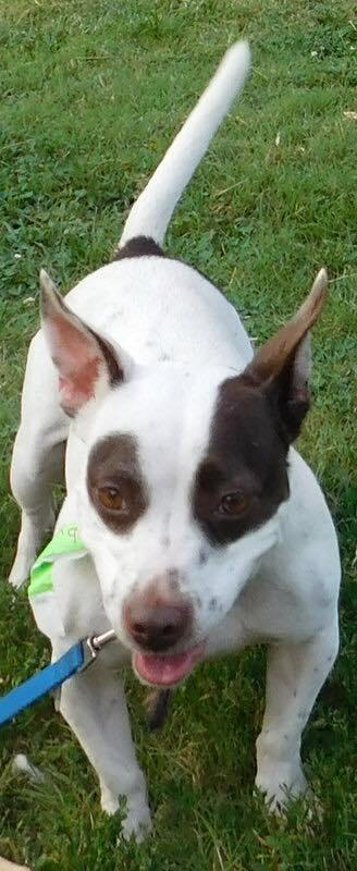 Llevaron a su perro al veterinario con una extraña infección de mariquitas en la boca